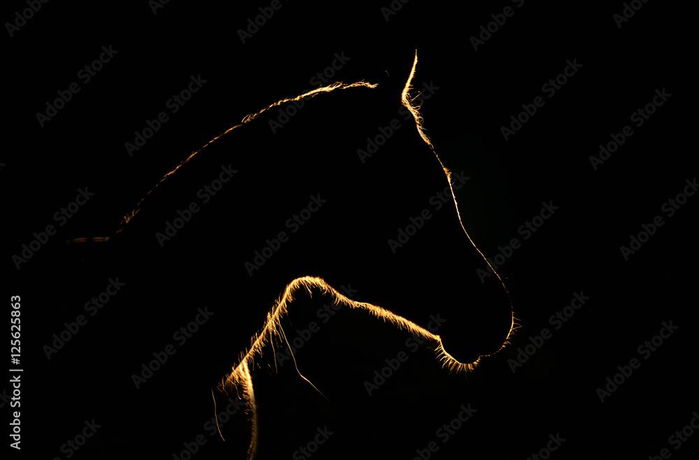 Fototapeta światłem malowany