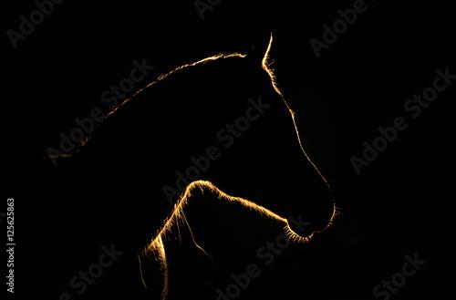 Obraz światłem malowany - fototapety do salonu