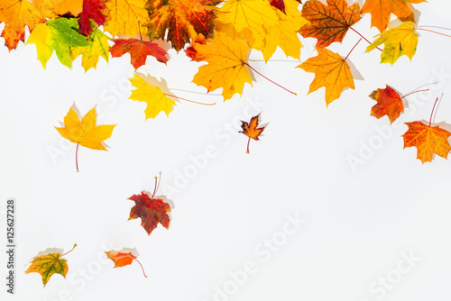 Obraz autumn leaves isolated - fototapety do salonu