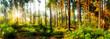 Herbstlicher Wald bei Sonnenaufgang mit Sonnenstrahlen im Nebel