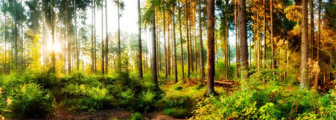 Panel SzklanyHerbstlicher Wald bei Sonnenaufgang mit Sonnenstrahlen im Nebel