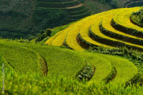 Fotobehang Rijstvelden Close-up of terraced rice fields, Mu Cang Chai, YenBai, Vietnam