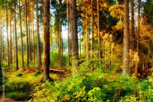 Papiers peints Forets Herbstliche Szene im Wald bei Sonnenaufgang
