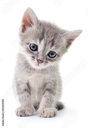 Small gray kitten. Canvas Print