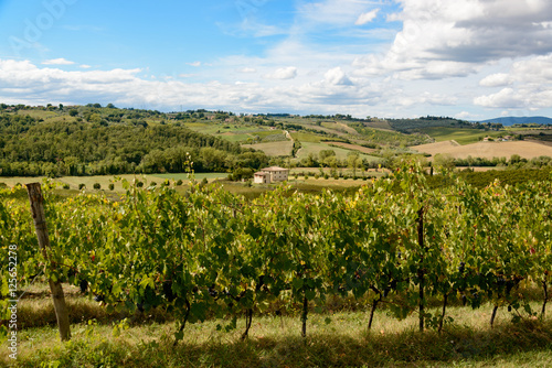 Papiers peints Vignoble Landschaft nahe Siena tenuta di monaciano