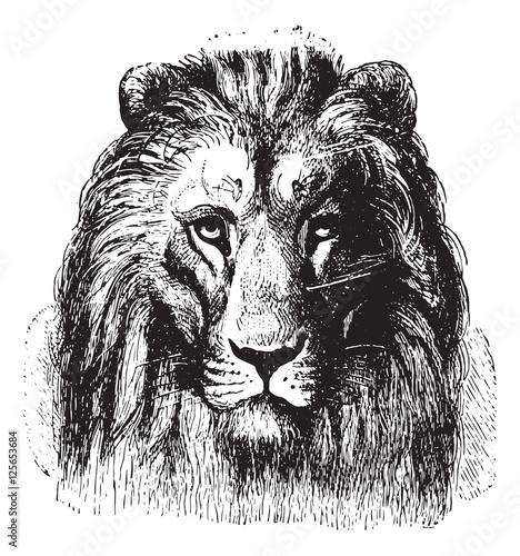Deurstickers Hand getrokken schets van dieren Lion's face, vintage engraving.
