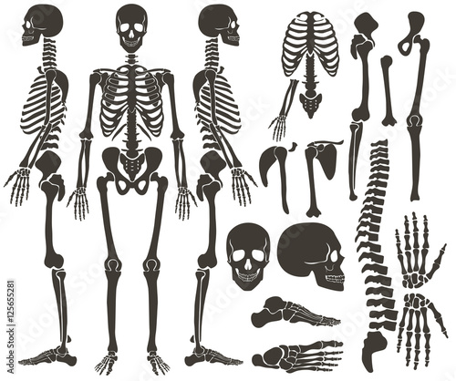 Fototapeta Human bones skeleton dark black silhouette collection