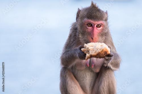In de dag Monkey eating bread