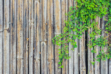 Bamboo Wood Fence With Green Foilage