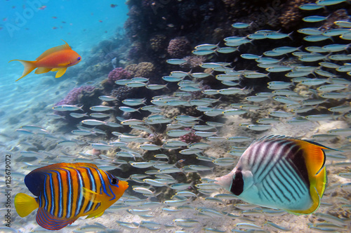 Poster Sous-marin Fish and coral underwater