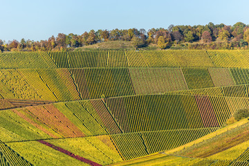 FototapetaVineyards - beautiful landscape of wine region