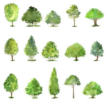 Vector Set Of Trees Drawing By...
