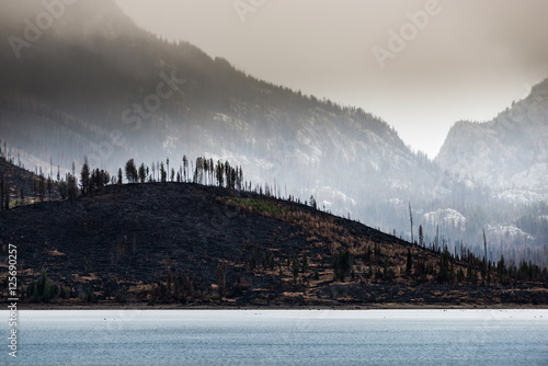 Wildfire aftermath Jackson Lake Grand Teton Wallpaper Mural
