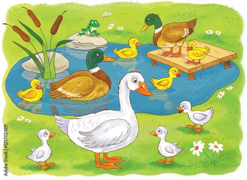 excellent resource for biology | Wetlands activities, Wetland ... | 364x500