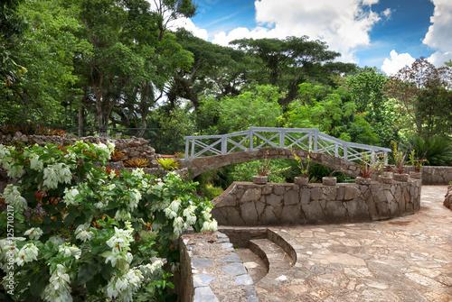 Fotografija  tropical garden in Cuba