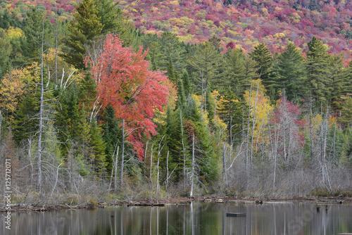 In de dag Bomen Adirondack Pond in Autumn
