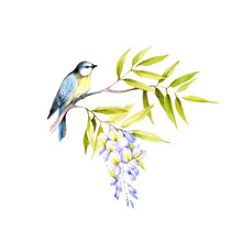 Bird On A Branch Of Wisteria. Hand Draw Watercolor Illustration