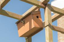 Tomtit Leaves Nest Box