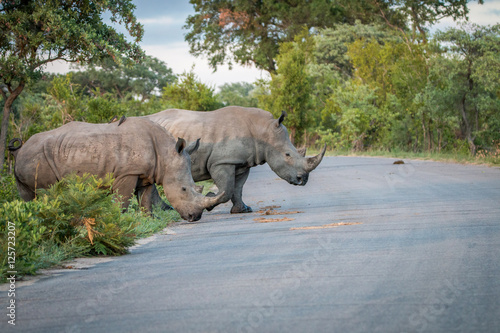 Two White rhinos crossing the road.