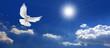 canvas print picture - Frieden Taube mit Wolken und Sonne
