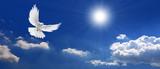Fototapeta Na sufit - Frieden Taube mit Wolken und Sonne