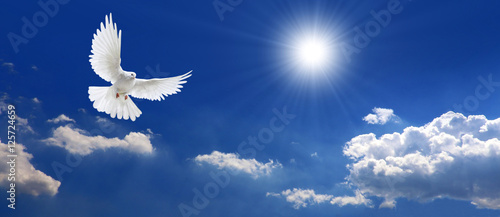 Fotografering Frieden Taube mit Wolken und Sonne