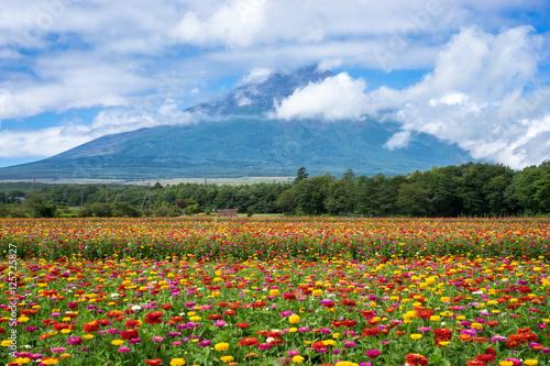 Papiers peints Azalea 富士山と花畑(日本・静岡・山形)