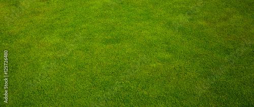 Door stickers Grass Green grass texture from a golf course