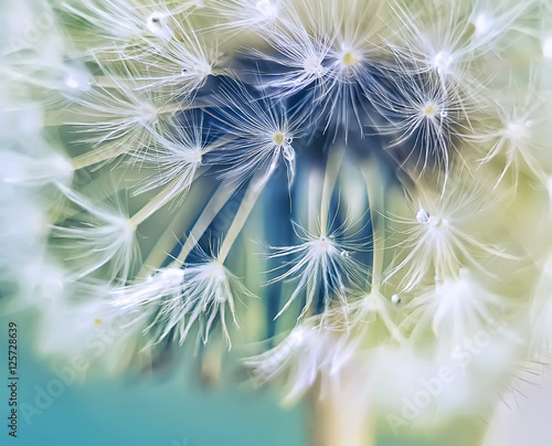 close-up of dandelion fluff. Art photo. Pastel gentle tone, blur, calm tones. soft focus.