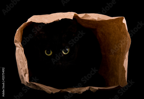 Fotografie, Tablou  Black cat hiding in the shadows of a paper bag, with her eyes gleaming in the da