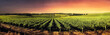 canvas print picture - Stunning Sunset Vines