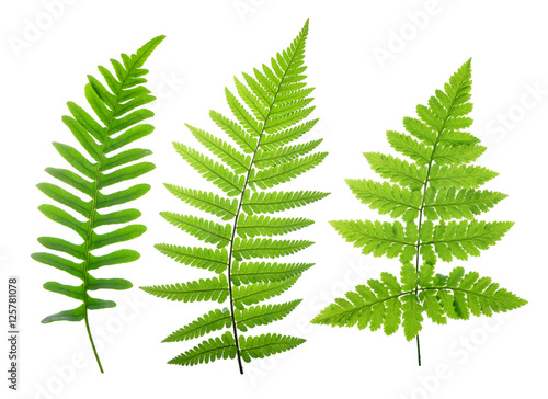Set of green fern leaves isolated on white background