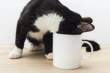 Funny Black-white Cat Crawled Into A White Coffee Mug.