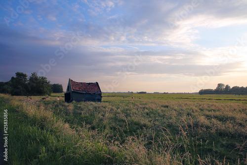 Poster Sheep Weide met vervallen huisje en blauwe lucht