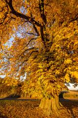 Plakat Herbst