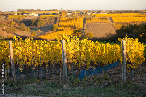 Papiers peints Orange Vigne en Anjou à l'automne
