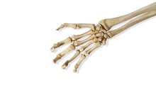 Still Life Of A Skeleton Arm On A White Background