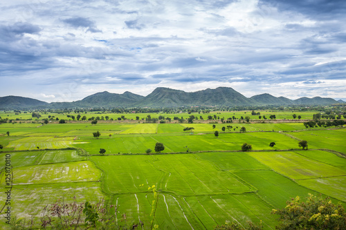 Fotobehang Rijstvelden Landscape of jasmine rice green field with mountain and cloud sky background at Kanchanaburi Thailand