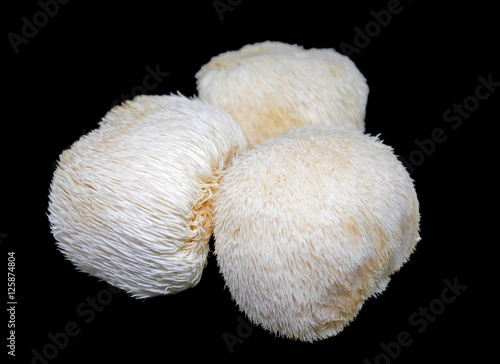 Fotografía  Lion's mane mushroom on black background