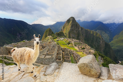 Tuinposter Lama Llama standing at Machu Picchu overlook in Peru