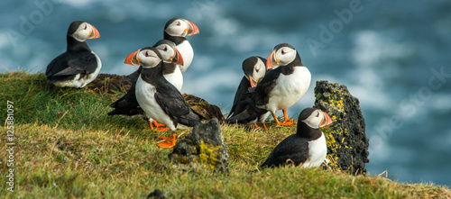 Foto Puffin, Heimaey coast, South Iceland