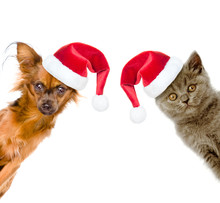 Funny Portrait Of A Cat And A Dog In Red Santa Hats Peeking. Isolated On White