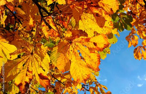 Kastanienblätter im Herbst