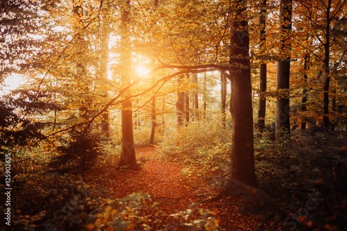 Photo  Warm autumn scenery in a forest, with the sun casting beautiful rays of light th