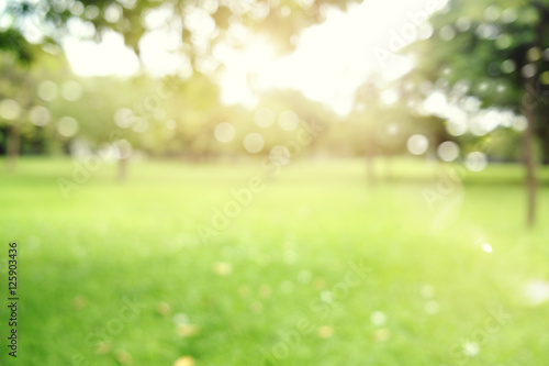 Poster Garden defocused bokeh background of garden trees in sunny day
