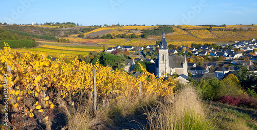 Tuinposter Wijngaard Les vigne à Saint Aubin de Luigné