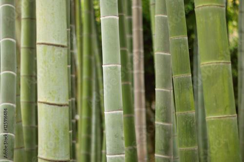 Foto op Plexiglas Bamboe Background Japanese Bamboo trees in horizontal frame