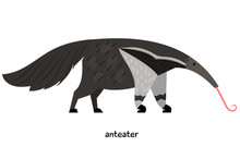 Anteater With A Red Tongue And A Lush Tail