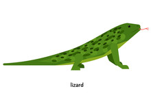 Green Lizard With Red Tongue