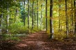 canvas print picture - Herbstlicher Wald in Schieder